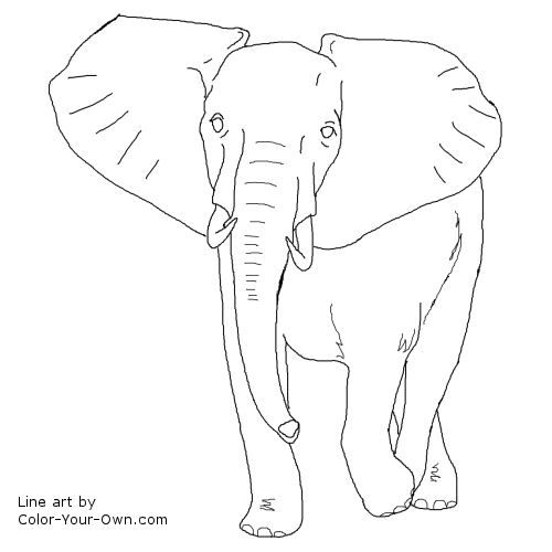7 Pics of Artistic Elephant Coloring Page - Elephant Clip Art Free ...