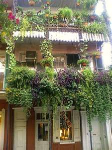 The french quarter of new orleans with its signature for Best flowers for apartment balcony