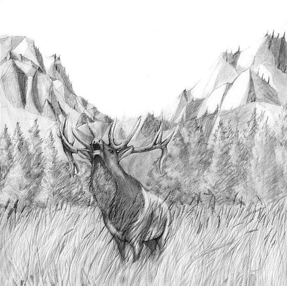 Pencil Drawing-Elk Bugling ô¿ô¬ | Animals Galore ...