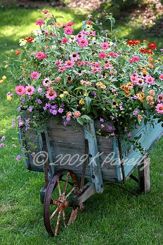 zinnias in a garden cart~always wanted one of these old wooden wheel barrows for my big yard!