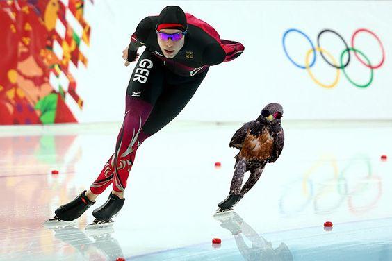 BOM HUMOR :) / Batalha de Photoshop: O falcão durão | +MMS