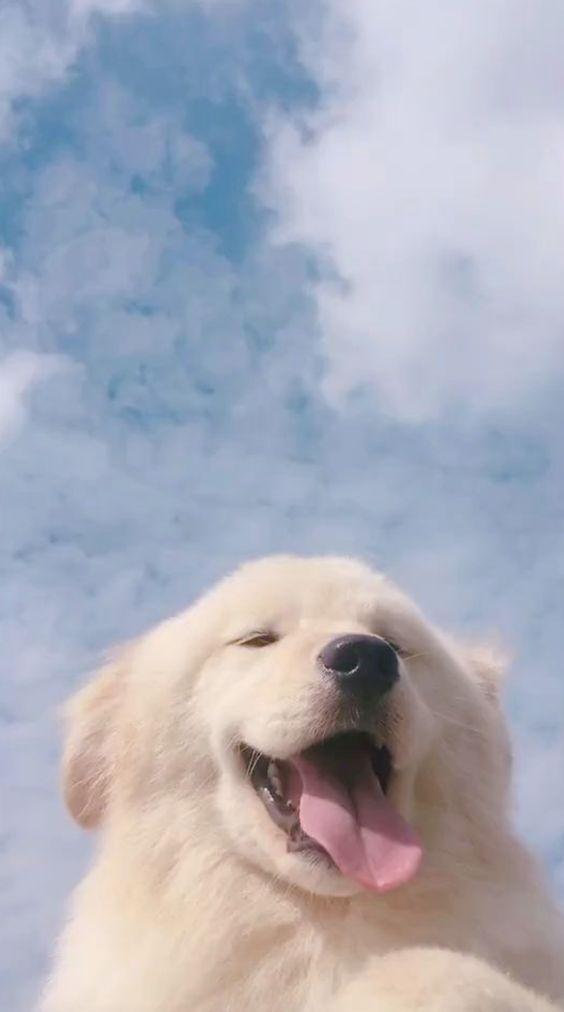 Cute Dogs Wallpapers Faces Cutegay Cuteguy Cutenails Cute