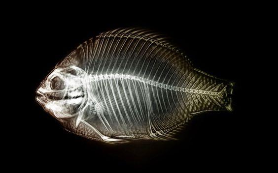 Guia jato: papel parede wallpaper peixe