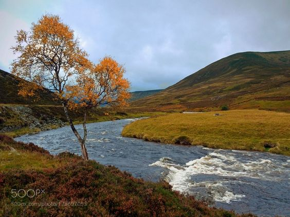 #photography Am Autumn tree on the Spittal of Glenshee by kennybarker https://t.co/xrrRtwi8XC #followme #photography