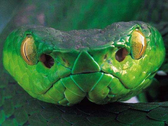Odeio cobras, Argh! Não dá nem pra saber se o olho dela é o nariz dela ou se o olho dela é o olho dela. Vc's entenderam né?