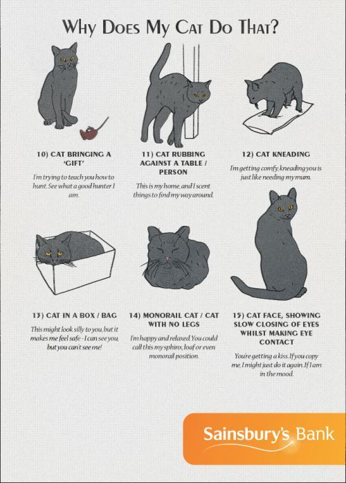 Cat Behavior American Infographic Cat Behavior Cat Language Cat Facts