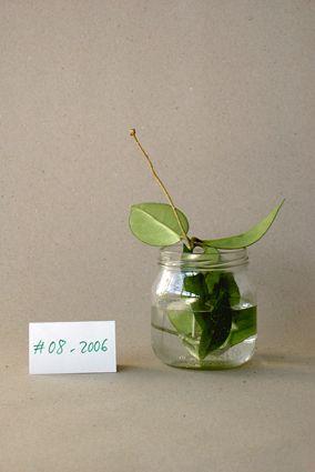 +: vintage plant
