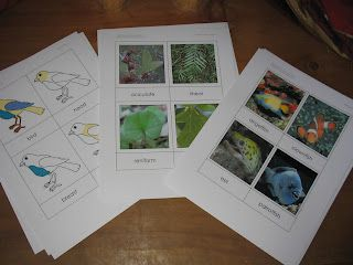 montessori science materials by Montessori by Hand