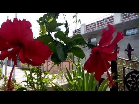 Youtube Organic Pesticide Medicinal Plants Garden Compost