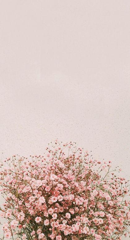Phone Wallpaper Sunflower Handyhintergrundbild Iphone Hintergrundbilder Frhling Inner Flower Iphone Wallpaper Floral Wallpaper Iphone Pink Flowers Wallpaper Iphone lock screen iphone spring