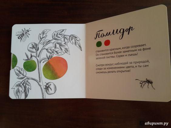Иллюстрация 12 из 12 для Цвет, привет! (интерактивная книга) - Марина Ложкина | Лабиринт - книги. Источник: pluzmary