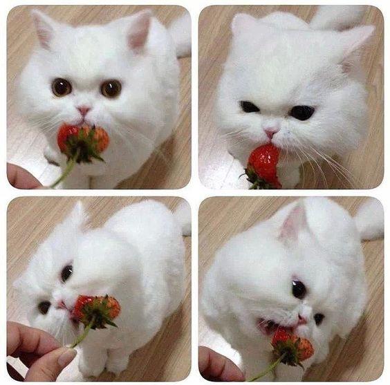 Il gattino che mangia la fragola