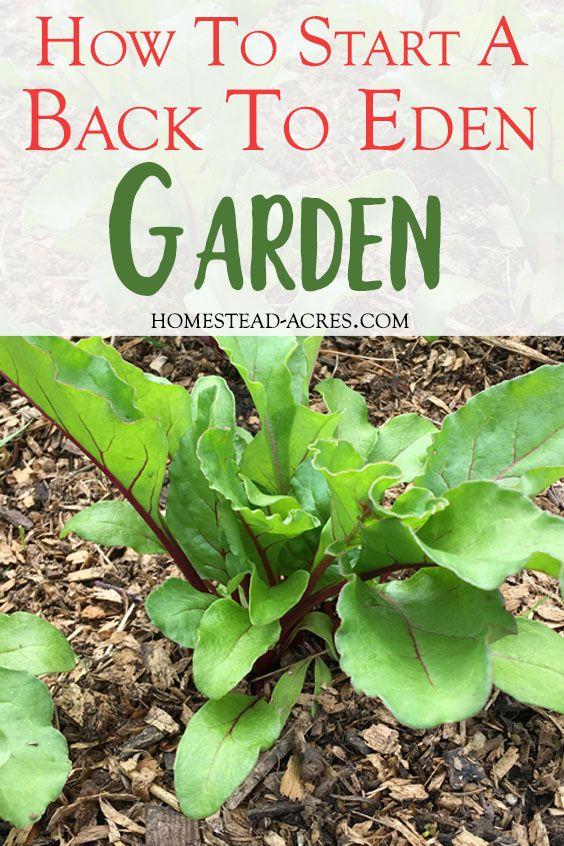 Beginner S Guide To Back To Eden Gardening No Dig Gardening