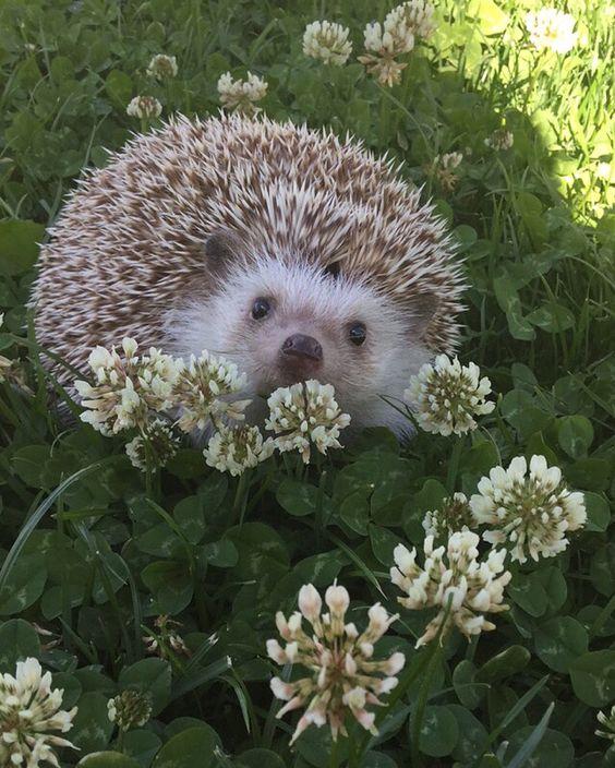 Oliver aka Flowerchild