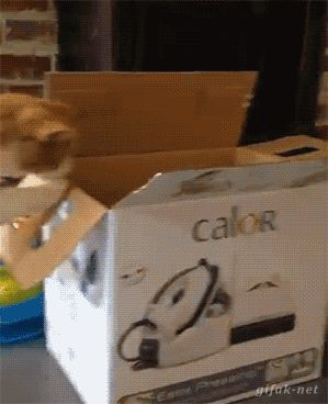 Mon chat, ce boulet... http://www.15heures.com/gif/rkgM #CUTE