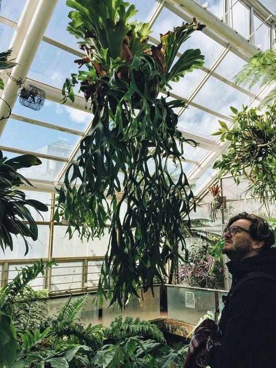 Nova York: um roteiro para ver plantas