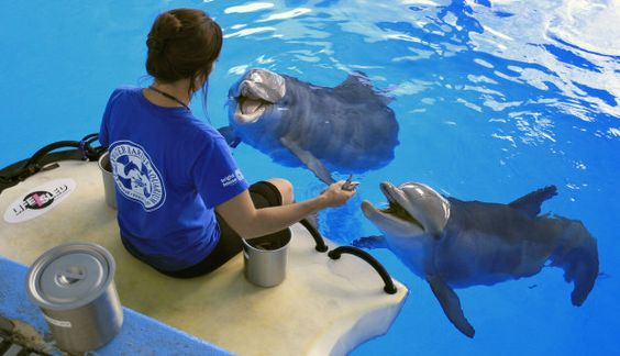 Best animal jobs of all time: http://aol.it/QYhCfW