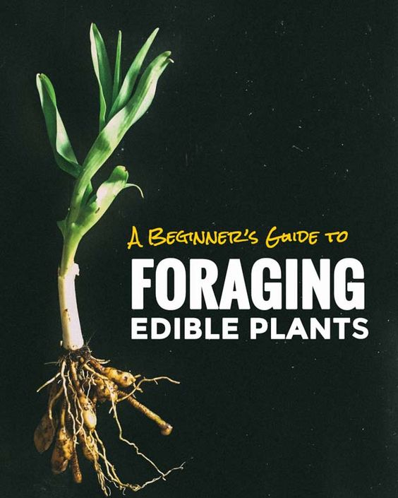 Foraging edible plants is much easier than you think. Here's an easy guide for foraging ramps , morels, wild ginger and other delicious wild food.