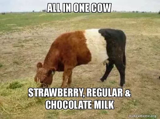 Where Chocolate Milk Comes From Farm Humor Show Cows Cute Funny Animals
