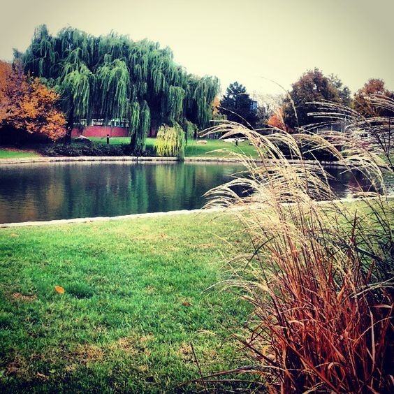 Fall picture from @Taniya Heyn Farooqui. Click on the pic and check out SLU's Instagram page!