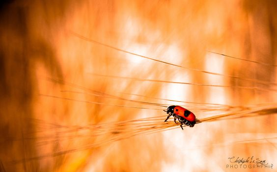 Minuscule by Christophe Le Sage Photographie on 500px