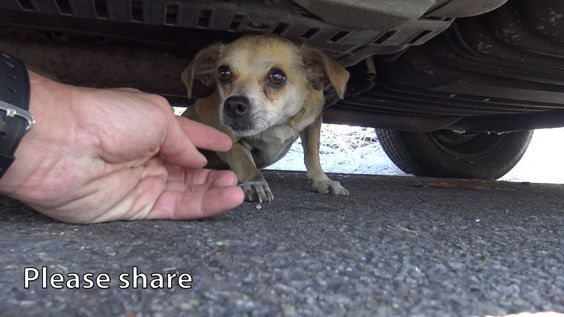 How a little microchip changed this dog's life!!!  Please share this imp...