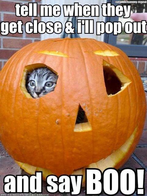 Jack-O-Cat: