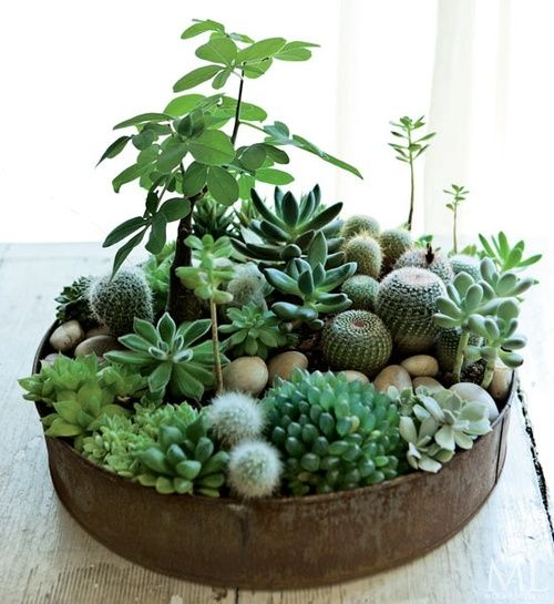 many textures, cactus and succulents with some verticality in non-succulents in rusty container:
