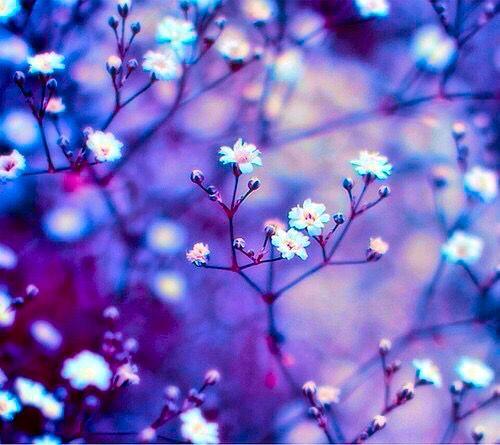 Grunge Blog | Making You Smile | Grunge/Nature Photography ...