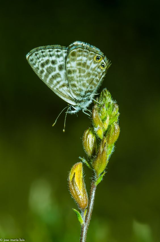MARIPOSA I by Jose Maria L.M on 500px