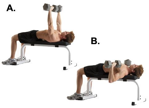 Image result for bench press dumbbell