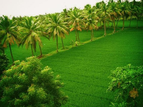 Know More about Palakkad District