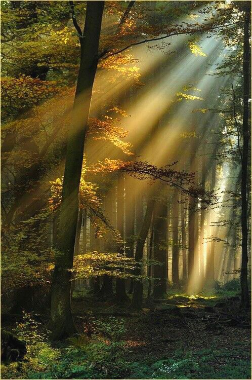 I Thank You God For This Most Amazing Day For The Leaping Greenly Spirits Of Trees And For The Blue Dream Of Sk With Images Nature Beautiful Nature Beautiful Landscapes