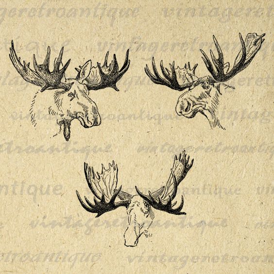 elk antlers graphic - photo #27