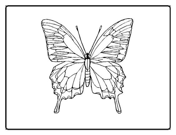 butterfly-coloring-pages00020im.jpg (869×671)