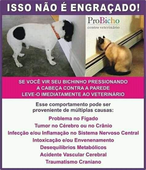 Pin Auf Animais E Proteccao Animal