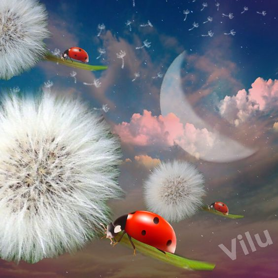 Ladybugs in Space - Virginia  Lucia:
