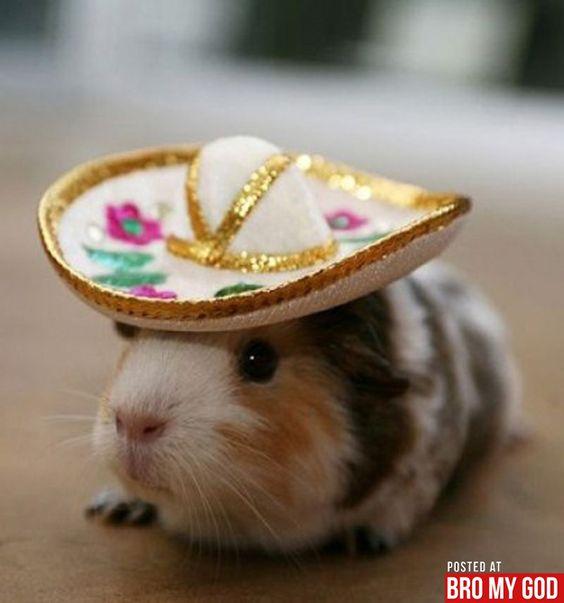 Hamsters. Forever.