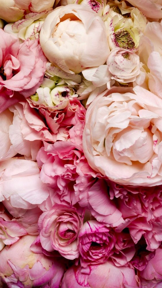 Pink peonies iphone wallpaper iphone background Fleurs pivoines