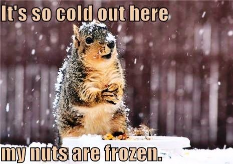 02bf1727aab7bc6759c6cddd1ddd5ff3 funny pictures of animals funny animals it's so cold ny \