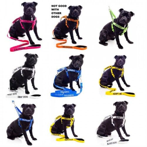 Color Coded Dog Leash  http://sogadget.com/color-coded-dog-leash/