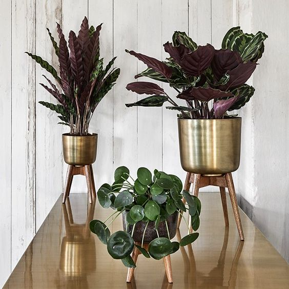 Adding height to displays is always a tricky thing to do but these brass planters have solved the problem since they come with a wooden stand, which is a visually appealing way to enhance the house plant.