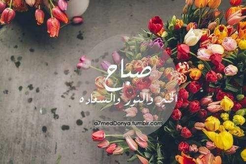 صور صباح الخير واجمل عبارات صباحية للأحبه والأصدقاء موقع مصري Tulips Petal Pushers My Secret Garden