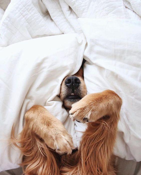 シーツをかぶったおしゃれでかっこいい犬の壁紙