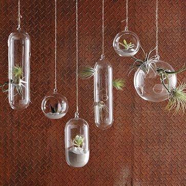 Love the hanging glass bubble with an air plant inside