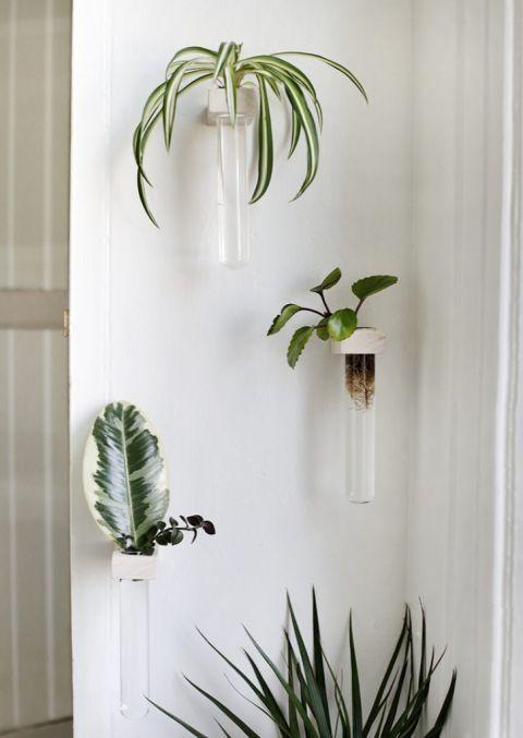 Diy Wall Propagation Tubes In 2020 Wall Vase Plant Wall Decor Diy Wall