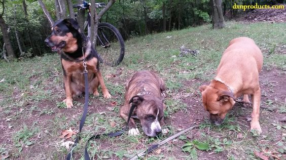 My 3 lovely dogs resting outside with my mountain bike propped against a tree. (I walk my dogs with a bike)