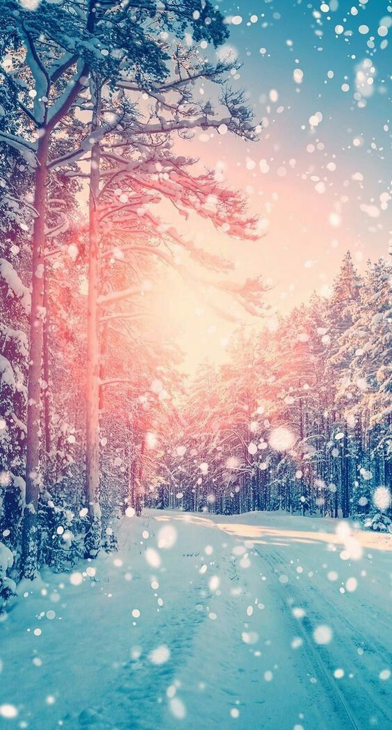 60 Beautiful Christmas Iphone Wallpapers Free To Download Winter Landscape Winter Wallpaper Winter Trees