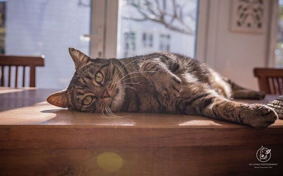 Tuesday night chill... Moses... available to adopt now from Sydney Animal Second-chance Inc. <3