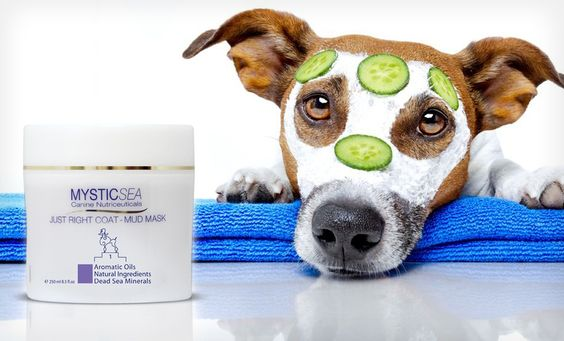 Groupon - $ 9.99 for an 8.5 Fl. Oz. Bottle of Mystic Sea Just Right Dog-Coat Mud Mask ($ 30.85 List Price). Free Returns.. Groupon deal price: $9.99. This stuff actually works really well if your dog has a greasy coat. Good deal!